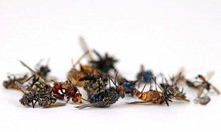 dezinsekce - hubení hmyzu