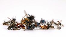deratizace hmyzu