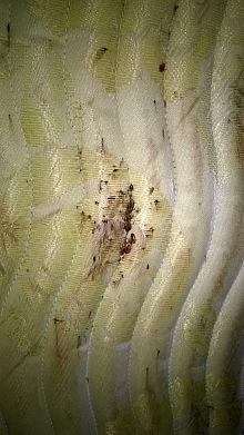 hmyz štěnice deratizace 1