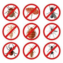 hubení hmyzu 1