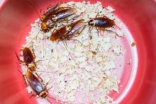 Hubení švábů 2