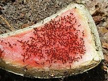 jak se zbavit mravenců 2