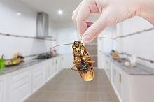 Jak se zbavit švábů 1