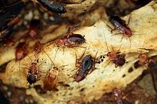 Jak se zbavit švábů 2