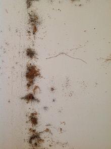 likvidace hmyzu 8
