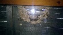 likvidace sršních hnízd 4