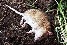 odpuzovač myší 3