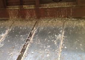 úklid holubích exkrementů a dezinfekce - před 1