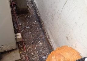 úklid holubích exkrementů a dezinfekce - před 3
