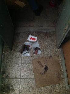 Akce hubení potkanů myší a hlodavců 1
